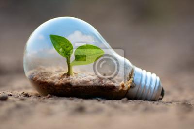 Poster Anlage, die innerhalb der Glühlampe für Schutzumweltkonzept wächst