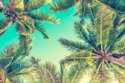 Poster Ansicht des blauen Himmels und der Palmen von unterhalb, Weinleseart, Sommerhintergrund