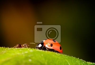 Ant erfüllt Ladybird