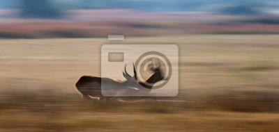Antelope durch die Savanne läuft in Botswana.
