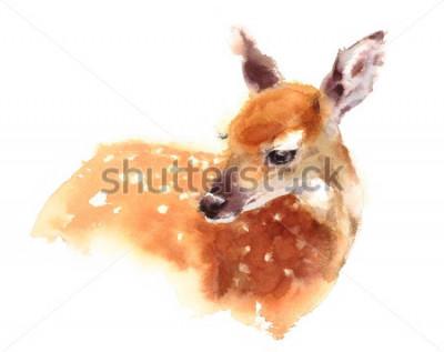 Poster Aquarell-Baby-Rotwild-handgemalte Kitz-Illustration lokalisiert auf weißem Hintergrund