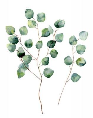 Poster Aquarell Silber Dollar Eukalyptus mit runden Blättern und Ästen. Hand bemalte Eukalyptus-Elemente. Floral Illustration isoliert auf weißem Hintergrund. Für Design, Textil und Hintergrund.