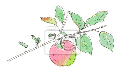 Aquarell Skizze Apfel Zweig