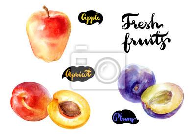 Poster Aquarellillustration der frischen Früchte. Apple, Aprikose, Pflaume getrennt auf weißem Hintergrund.