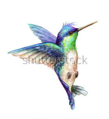 Poster Aquarellillustration, fliegender Kolibri lokalisiert auf weißem Hintergrund, exotische, tropische, wilde Lebenclipart