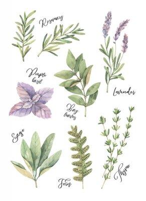 Poster Aquarellillustration.  Plakat mit botanischen grünen Blättern, Kräutern und Zweigen.  Blumengestaltungselemente.  Perfekt für Hochzeitseinladungen, Grußkarten, Blogs, Drucke, Postkarten