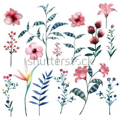 Poster Aquarellsatz tropische natürliche mit Blumenelemente der Weinlese. Exotische Blumen, Zweige und Blätter. Botanische helle klassische Sammlung lokalisiert auf weißem Hintergrund.