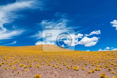 Atacama Altiplana Wüstensavanne und Berge gestalten, Miniques, Chile, Südamerika landschaftlich