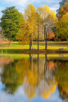 Autumn colored trees next to the pond
