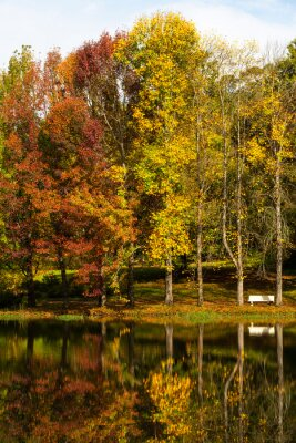 Autumn colored trees reflection on water