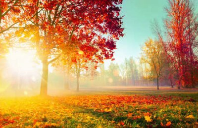 Poster Autumn Landscape. Fall Scene. Trees and Leaves, Foggy Forest in Sunlight Rays