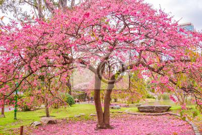 Azalee Ein Baum Am Japanischen Garten Von Buenos Aires Argentinien