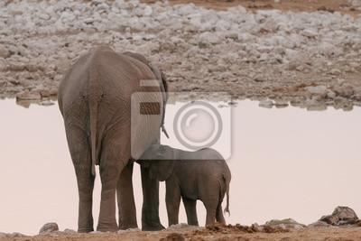 Babyelefant, der von der Mutter am waterhole pflegt