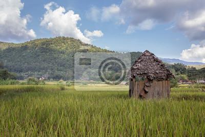 Bambus-Schuppen in einem Reisfeld in Thailand