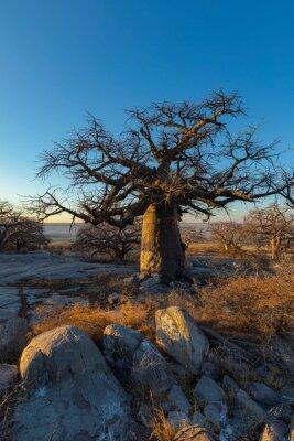 Baobab tree and rocks on Kubu Island