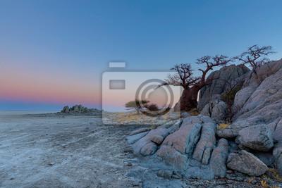 Baobab tree and rocks on Kubu Island after sunset