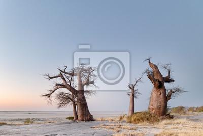 Baobab trees on Lekhubu island, Botswana.