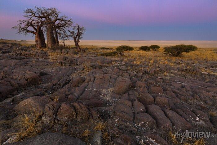 Poster Baobabs in den frühen Morgenstunden