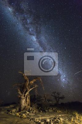 Baobabs unter der Milchstraße