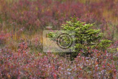 Baum in der Mitte der lila Blüten