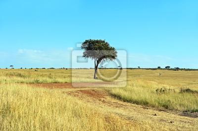 Baum in der Savanne