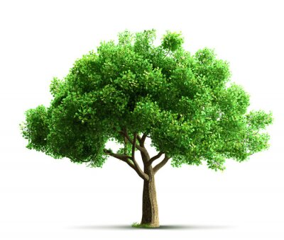 Poster Baum isoliert