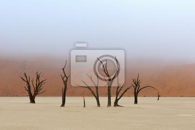 Baum-Skelette, Deadvlei, Namibia