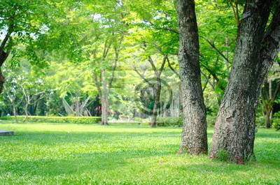 Poster Bäume im Park mit grünem Gras und Sonnenlicht, frische grüne Natur Hintergrund.
