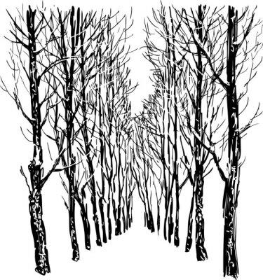Poster Bäume im Winter Park