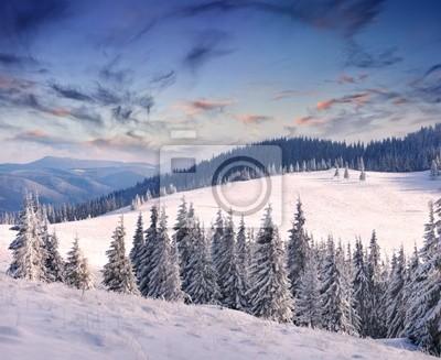Bäume mit Raureif und Schnee in den Bergen bedeckt. Sonnenaufgang