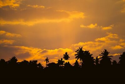 Poster Beautiful cloudscape with palm trees silhouettes