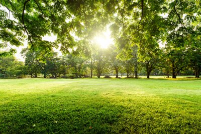 Poster Beautiful landscape in park with tree and green grass field at morning.
