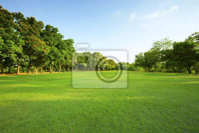Poster beautiful morning light in public park with green grass field an