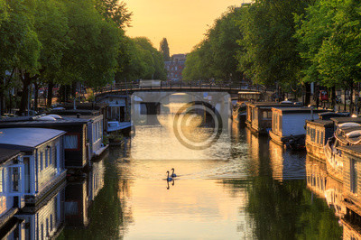 Beautiful summer sunrise on the famous canals of Amsterdam, the Netherlands, in summer with swans in the water