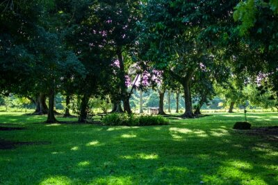 Poster Beautiful view of a park with green fields and trees at day time