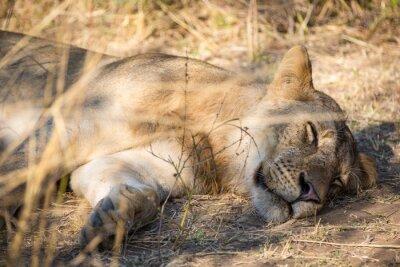 Beautiful Wildlife in South Luangwa, Zambia, Africa
