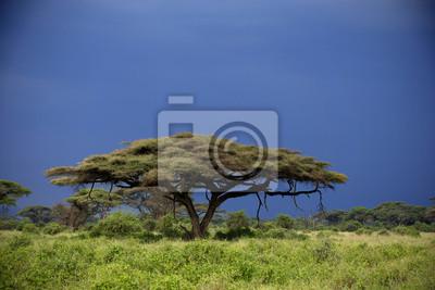 Bei Sonnenuntergang und mit Gewitterwolken im Hintergrund Amboseli