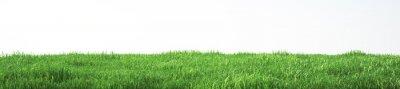 Poster Bereich der weichen Gras, perspektivische Ansicht mit close-up