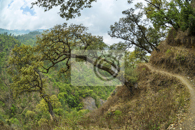 Bergkurve Wanderweg mit Bäumen writhen