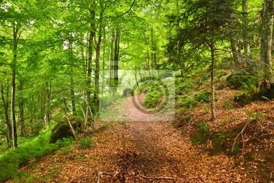 Bergwald in Pyrenäen, Frankreich