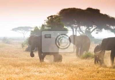 Big Elefanten auf afrikanischen Savanne in nebligen Morgenlicht