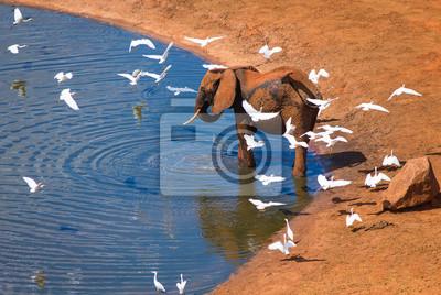 Big Elefanten mit weißen Vögel in der Nähe von Wasserloch