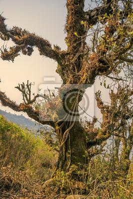 Big Fee alten Baum
