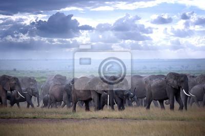 Big Herde von Elefanten auf afrikanische Savanne in nebligen Abend Licht
