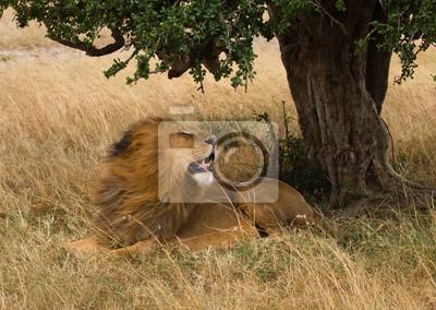 Big Lion auf afrikanischen stürmischen Savanne in Kenia