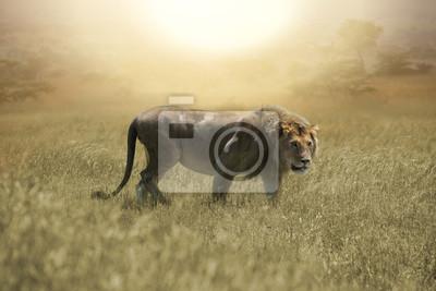 Big Löwe auf afrikanischen Savanne in Serengeti