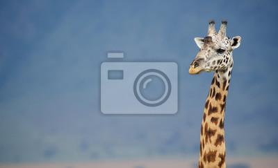 Big männliche Giraffe gegen einen blauen Berg