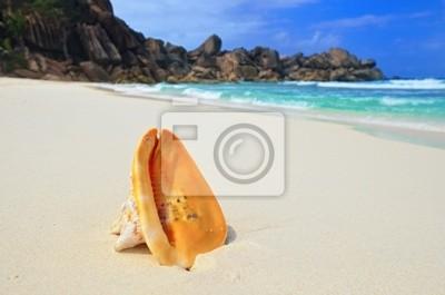 Big Shell auf dem Ozean Ufer
