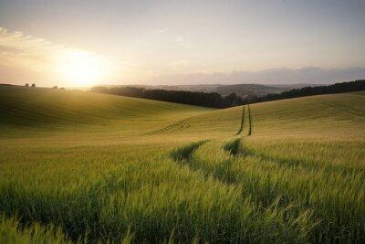 Poster Bild Sommerlandschaft von Weizenfeld bei Sonnenuntergang mit schönen l