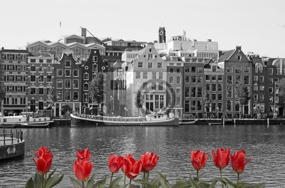 Black and white Amsterdam with red tulips